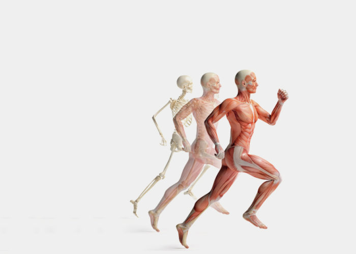 Bones may act as internal scales that monitor weight